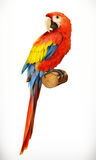 Ara parrot. Macaw. Photo realistic Stock Photos