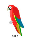 Ara parrot. Red ara vector illustration Stock Photography