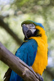 Ara parrot. In the zoo Stock Photo