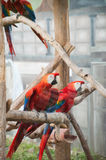 Ara parrot. At the zoo Royalty Free Stock Images