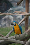 Ara parrot. At the zoo Stock Photos
