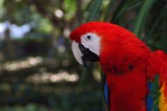 Ara ptak w ogródzie Zdjęcie Royalty Free