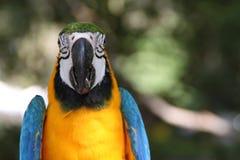 Ara ptak w ogródzie Obraz Royalty Free