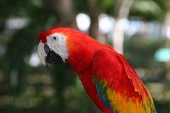 Ara ptak w ogródzie Zdjęcia Royalty Free