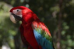 Ara ptak w ogródzie Fotografia Stock