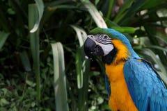 Ara ptak w ogródzie Zdjęcia Stock