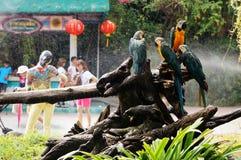 Ara's die zich aan boomtak vastklampen Stock Fotografie