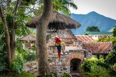 Ara w kolonialnych klasztor ruinach z górami Fotografia Stock