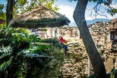 Ara w kolonialnych klasztor ruinach z górami Obraz Royalty Free