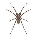 Araña Imagen de archivo