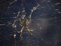 Araña y Web del Huntsman Fotos de archivo libres de regalías