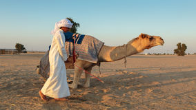 Arab boy with a camel on the farm Royalty Free Stock Photo