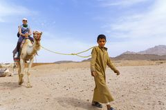 Arab boy rolls tourists on a camel. Stock Photo