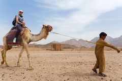 Arab boy rolls tourists on a camel. Stock Images