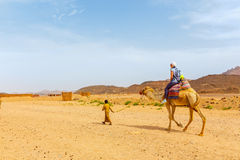 Arab boy rolls tourists on a camel. Royalty Free Stock Photography
