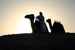 An Arab Camel Herder. Pauses for a rest at sunset Stock Photo
