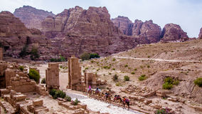 Arab camels in the ancient city of Petra, Jordan Stock Photo