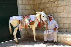 Arab with a donkey in Jerusalem Royalty Free Stock Photo