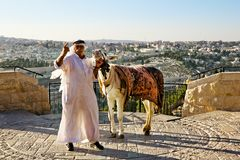 Arab donkey on the observation deck of the Mount of olives Stock Photography