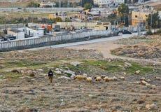 Arab guy grazes a herd of sheep near to Herodium Herodion Fort. JERUSALEM, ISRAEL - DECEMBER 28, 2016: Arab guy grazes a herd of sheep near to Herodium Herodion Royalty Free Stock Photo