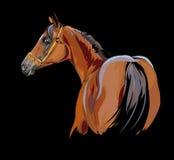 Arab horse on black illustration Stock Photo