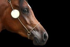 Arab horse head Royalty Free Stock Photo
