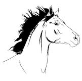 Arab horse sketch Stock Photography