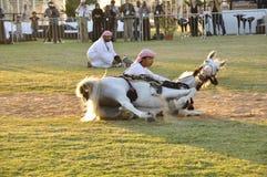 Arab Horseman Royalty Free Stock Photo