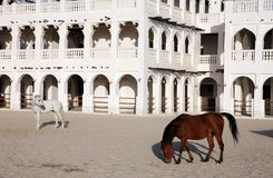 Arab horses horizontal Stock Images