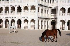 Arab horses horizontal Stock Images