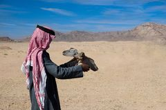 Arab hunter with falcon in his hands. stock photos