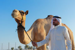 Arab man and camel Royalty Free Stock Image