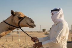 Arab man and camel Royalty Free Stock Photography
