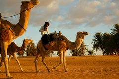Arab man on the camel Stock Image