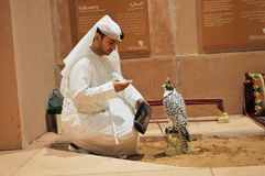 Arab man with Falcon in Abu Dhabi International Hunting and Equestrian Exhibition (ADIHEX). Arab man sitting with Falcon oh his hand in Abu Dhabi International stock photos