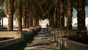 Arab man going up on stairs between palm trees in middle east. Arabian man walking on alley with palm trees in middle east stock footage