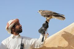 Arabian Man with his Falcon royalty free stock photos