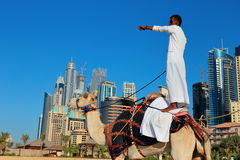 Arab man sitting on a camel on the beach in Dubai Stock Images