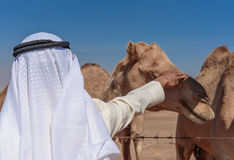 Arab men and camels Royalty Free Stock Photo