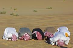 Arab men praying Asr in the desert Stock Photo