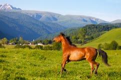 Arab race. R runs on a green summer meadow Royalty Free Stock Image