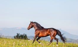 Arab racer Royalty Free Stock Image
