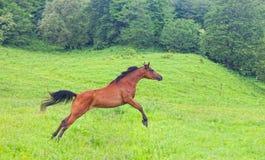 Arab racer Royalty Free Stock Photo