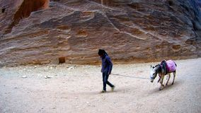 Arab young boy with donkycanyon ancient city of Petra in Jordan Stock Images