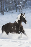 Araber im Schnee Стоковое Фото