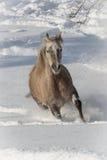 Araber im Schnee Photo stock