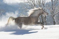 Araber im Schnee Image stock