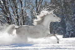 Araber im Schnee Image libre de droits