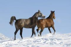 Araber im Schnee Photos stock