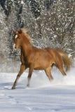 Araber im Schnee Стоковые Изображения